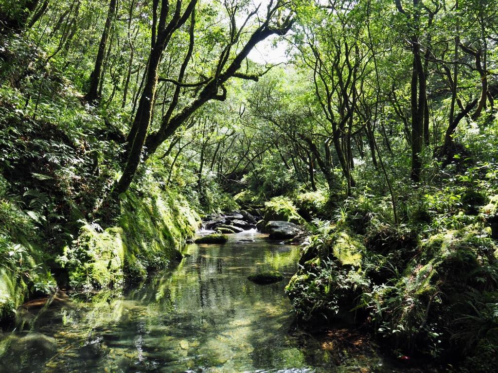 Tonghou Stream Trail in Yilan.